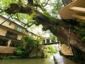 湯めぐりの宿 楠水閣 写真